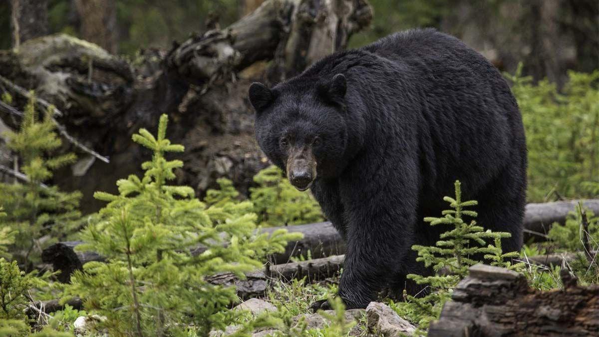 Video: así sorprendió un oso a esta mujer en una ruta de senderismo