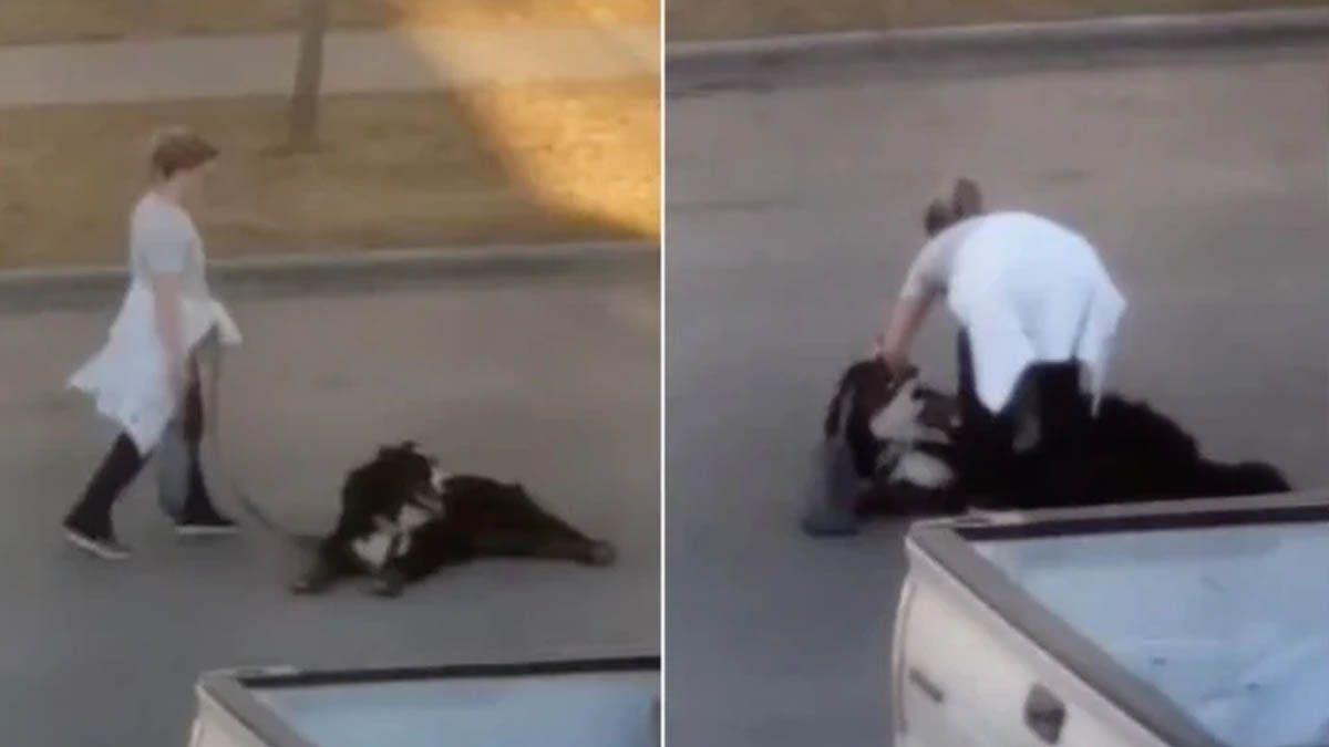 Un perro batalla con su dueña cuando se niega a regresar a casa