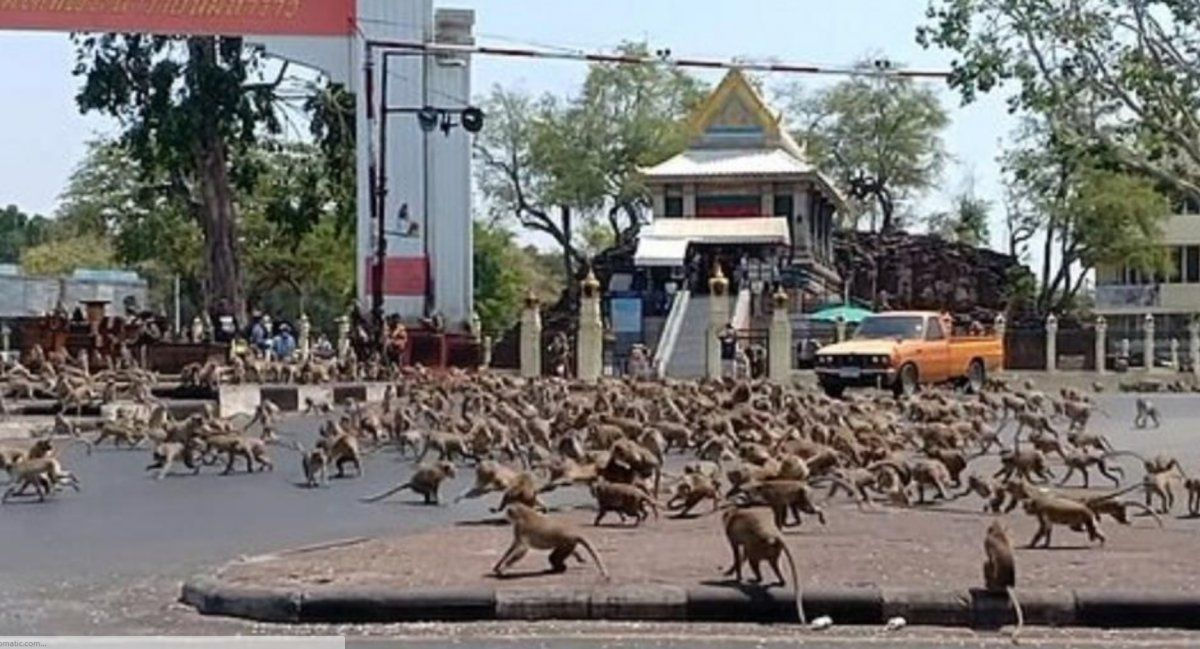 Invasión de monos en Tailandia.