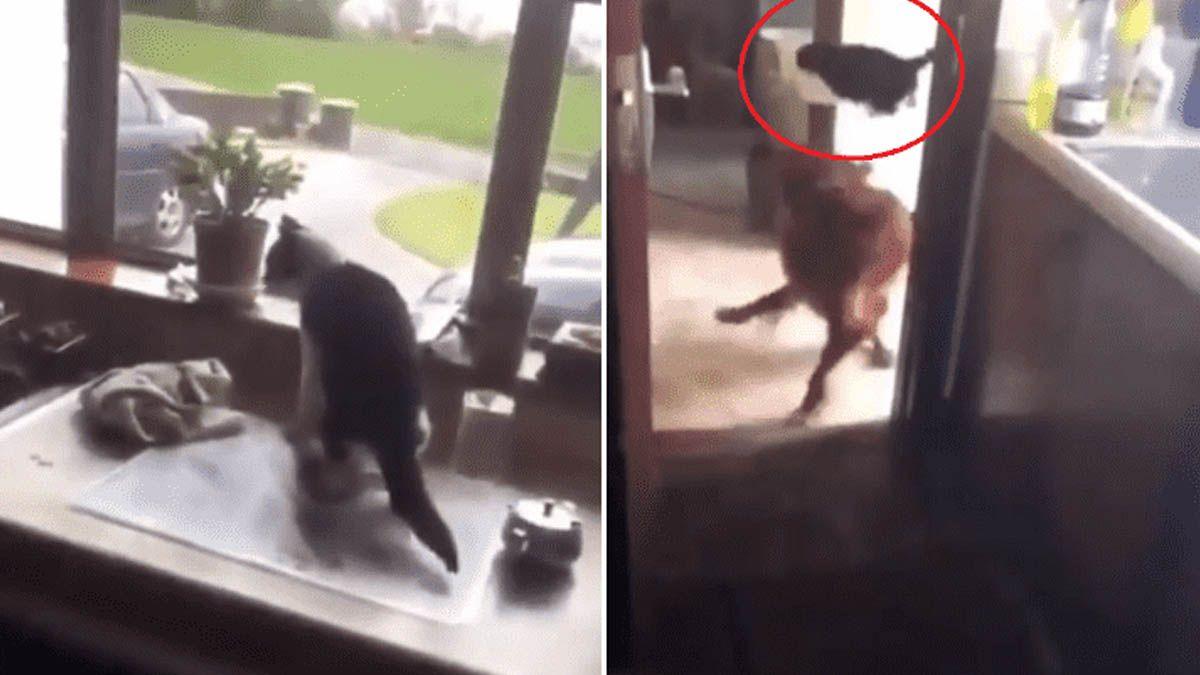 Un gato lográ escapar épicamente de un perro que lo tenía acorralado