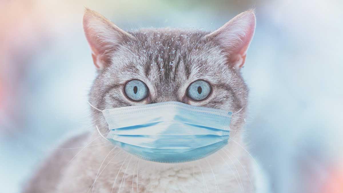Imagen ilustrativa. Un gato mordió a sus dueños estando infectado con un virus y debieron someterse a un análisis.