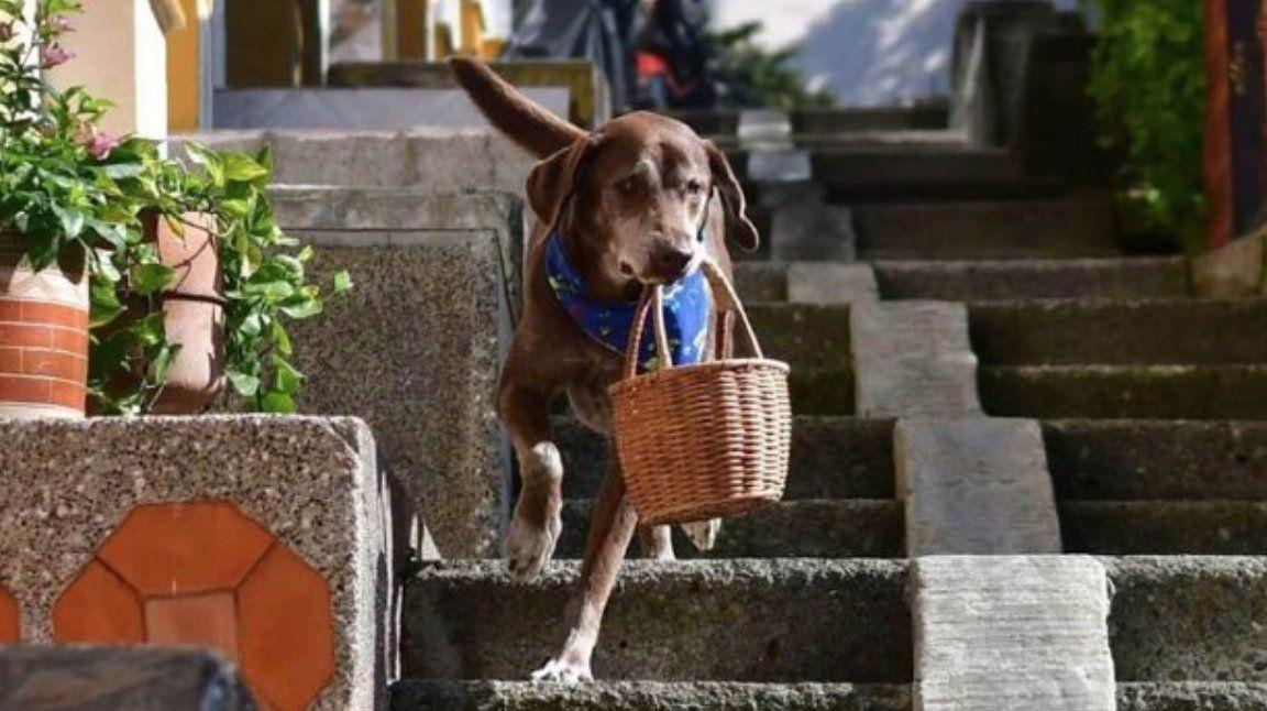 Le robaron la canasta al perro delivery.