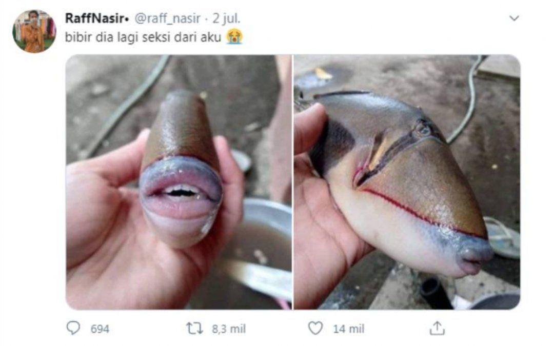 Un pez con boca de humano fue hallado en Indonesia.