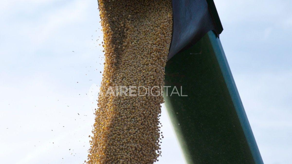 Los cereales recuperaron parte de lo perdido ayer en Chicago, mientras que la soja volvió a caer