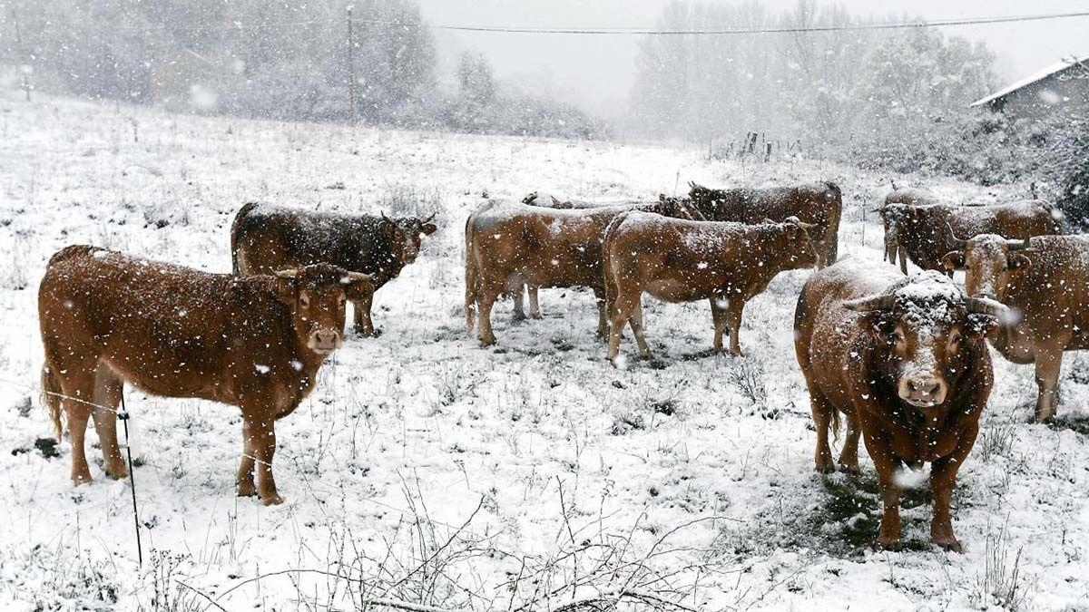 Las condiciones climáticas afectan al ganado de Santa Cruz.