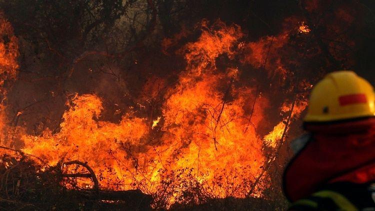 Por los incendios en la Amazonia, los jaguares en Bolivia están al borde de la extinción
