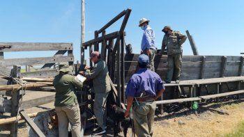 En un allanamiento que se realizó el domingo pasado, se encontró en un campo vecino la hacienda que desapareció de la estancia Las Gamitas.