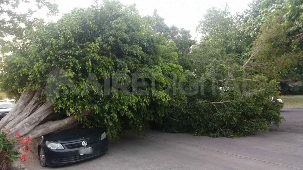 El auto estaba estacionado sobre calle Pedro Centeno cuando el árbol le cayó fuertemente encima.