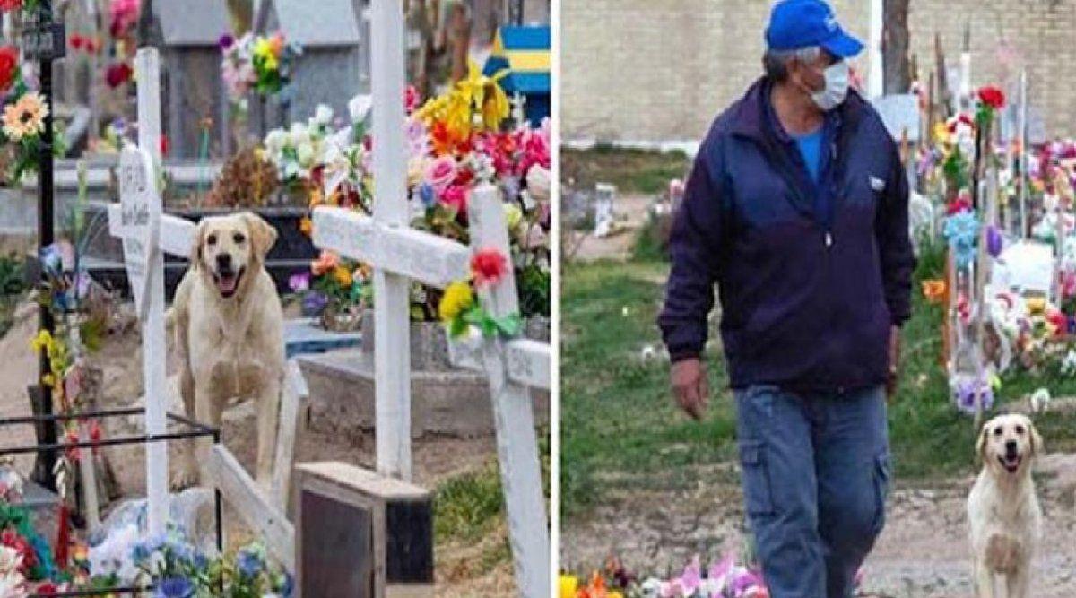 La conmovedora historia de lealtad del perro que vive junto a la tumba de su dueño