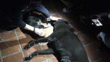 Las mascotas que vivían en la casa atacada murieron producto de los golpes y el humo del incendio provocado por familiares de alumnos de la escuela Ceferino Namuncurá.
