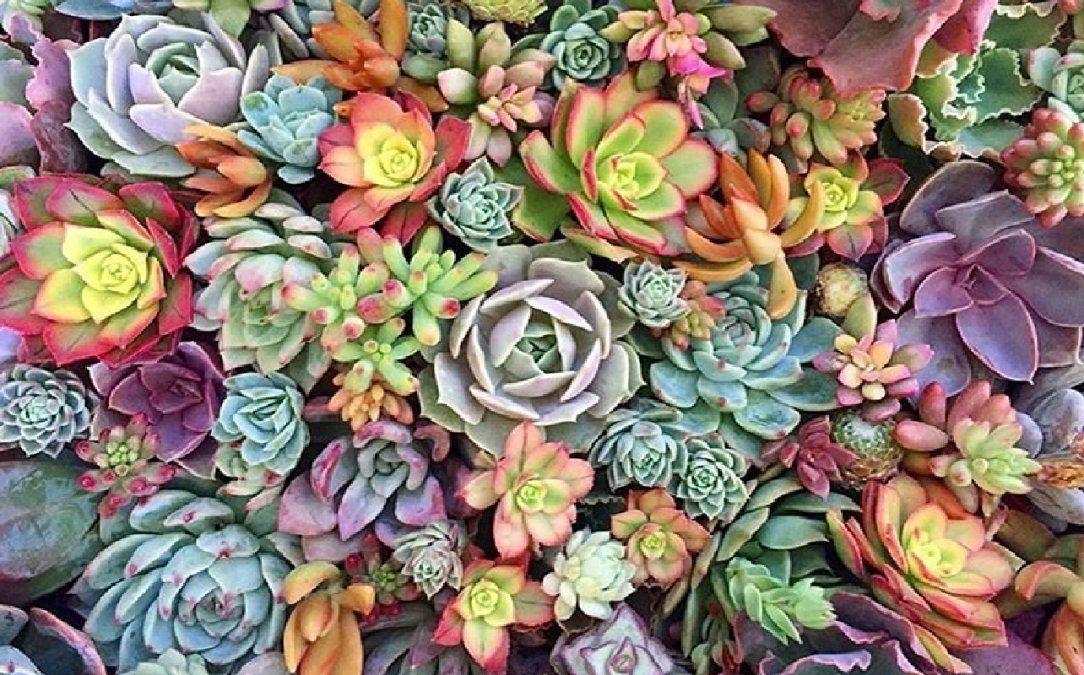 Plantas de decoración