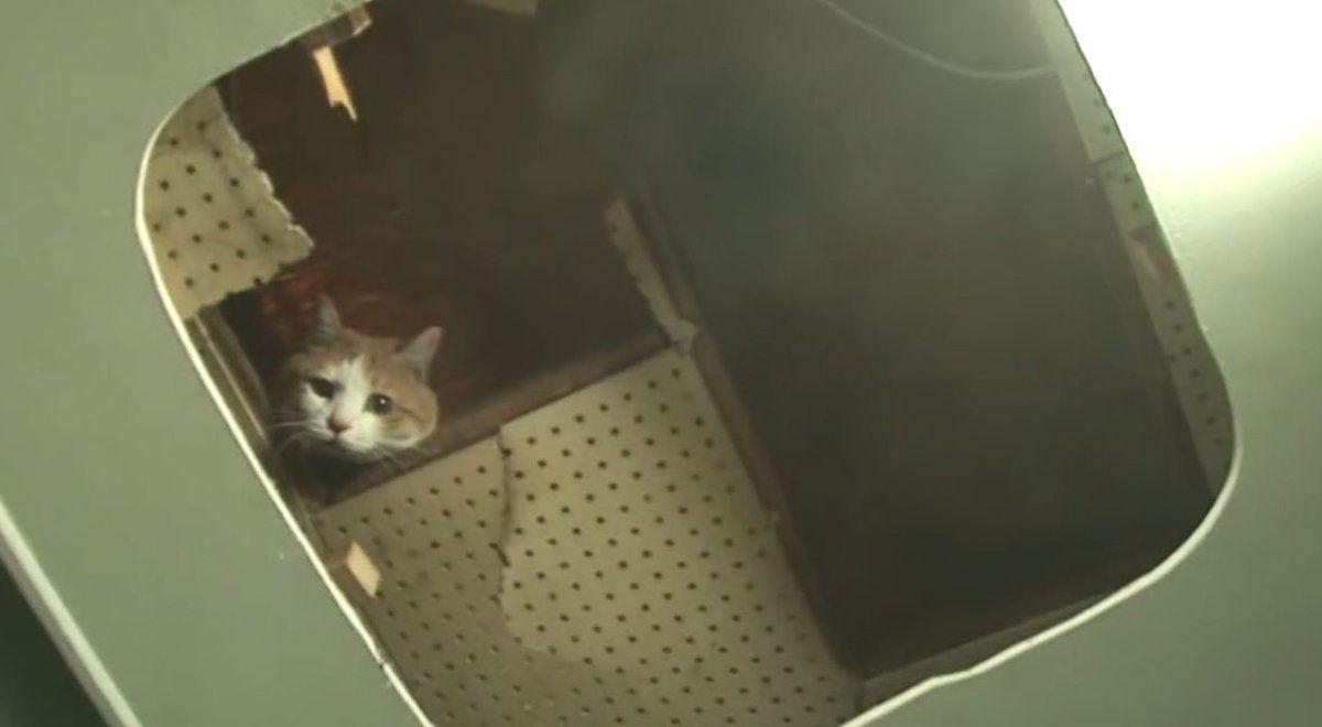 Rescataron a un gato que pasó dos años atrapado en la pared de un centro comercial