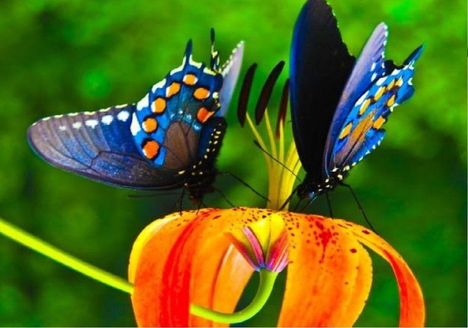 Las mariposas representan cambios