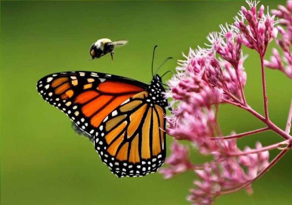 Los significados de las mariposaspueden ser asociados de acuerdo con el color