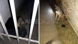 El menor tenía 12 años y murió entre el 4 y la madrugada del 5 de julio. La investigación judicial determinó que fue atacado por una jauría de perros.