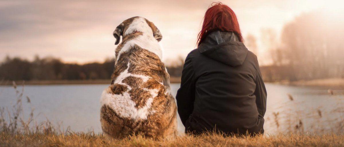 La muerte de una mascota es tan difícil de superar como la de un familiar