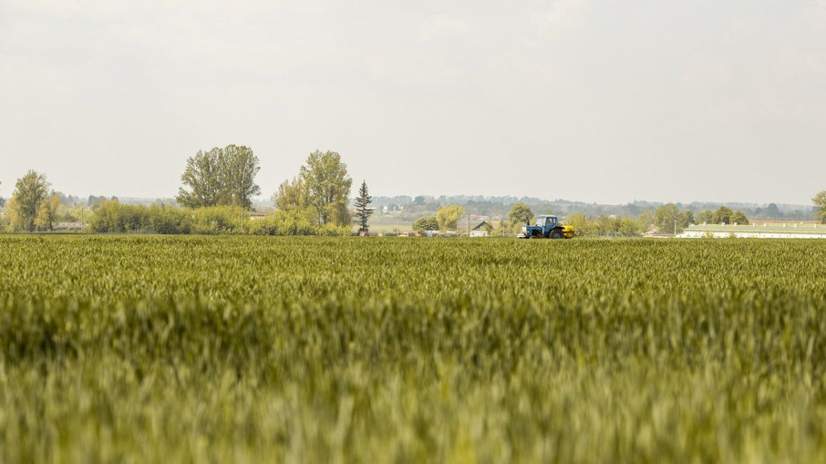 Los países del G20 representan alrededor de 60% de todas las tierras agrícolas y alrededor de 80% del comercio mundial de productos agrícolas.