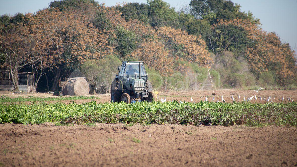 Agro: pronostican mayor producción y áreas sembradas para la campaña 2021/22