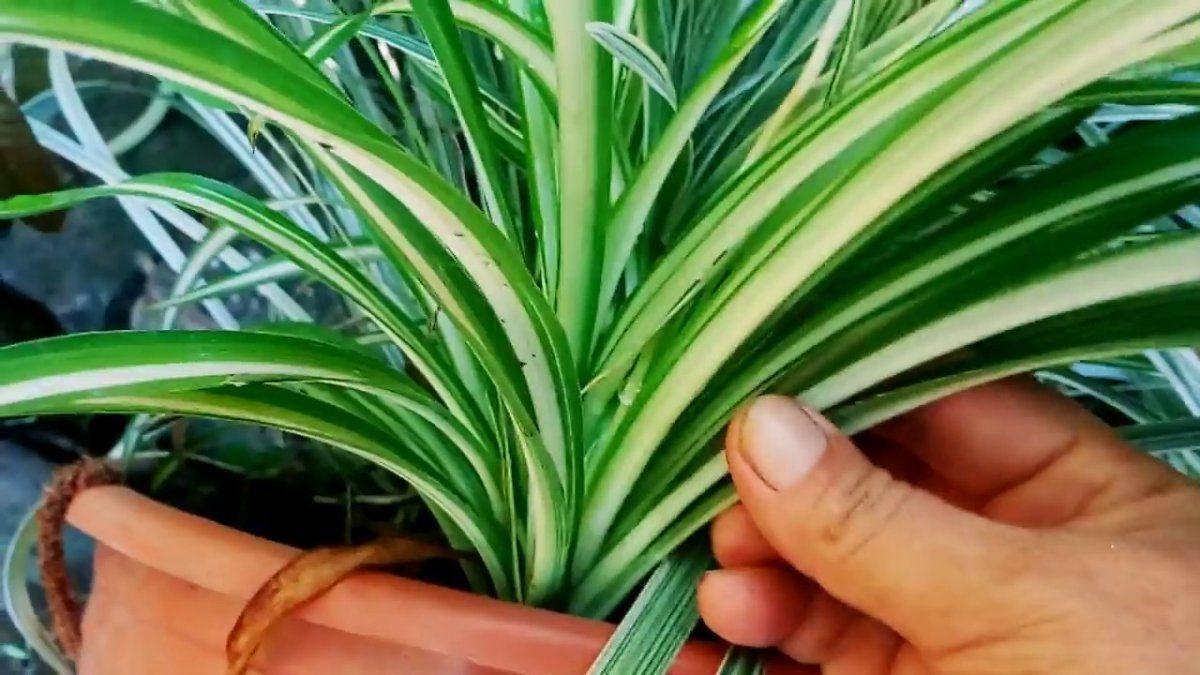 Plantas de interior que son buenas para tu salud