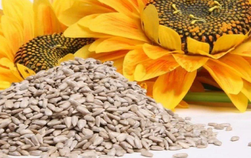 Beneficios y propiedades de las semillas de girasol