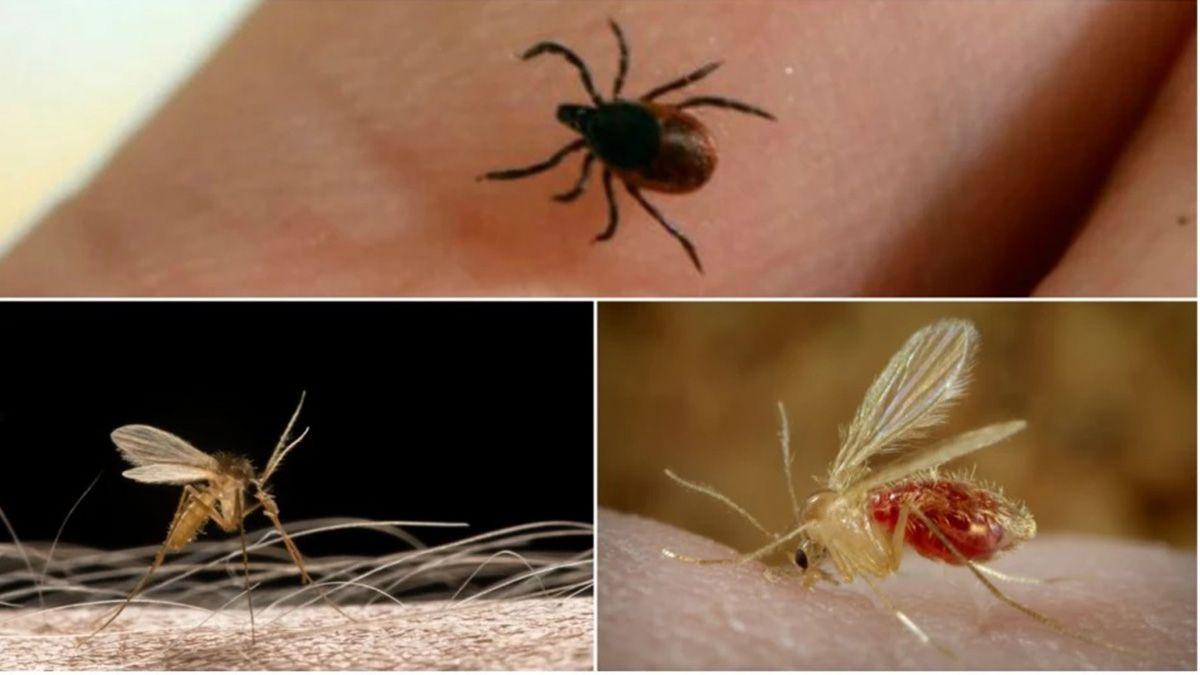 Qué es el Bunyavirus: un viejo virus mortal que reapareció en China