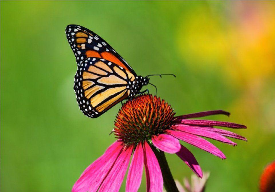 Las mariposas son símbolo de transformación
