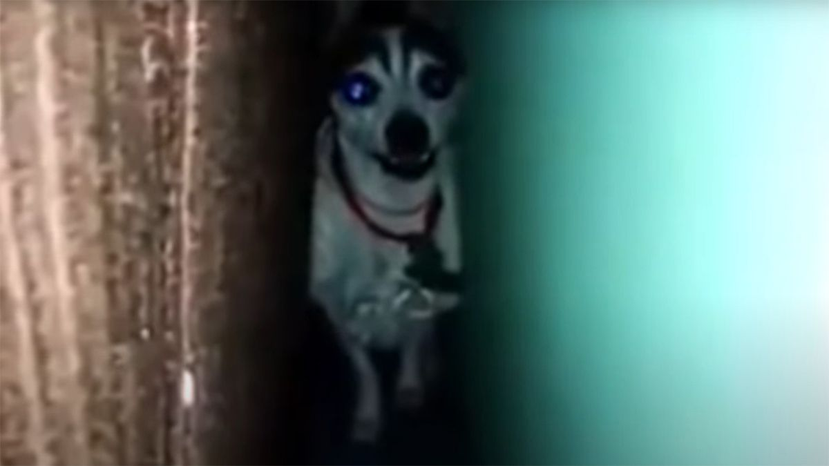 Hola Juan Carlos... Captura del video original que acompaña al audio viral
