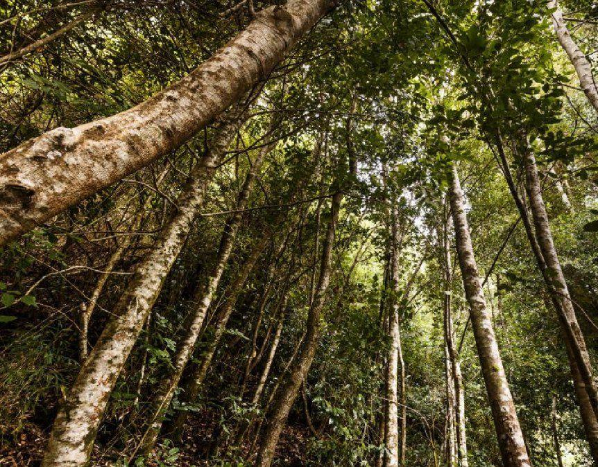 La verdadera importancia de los bosques para la vida en la Tierra
