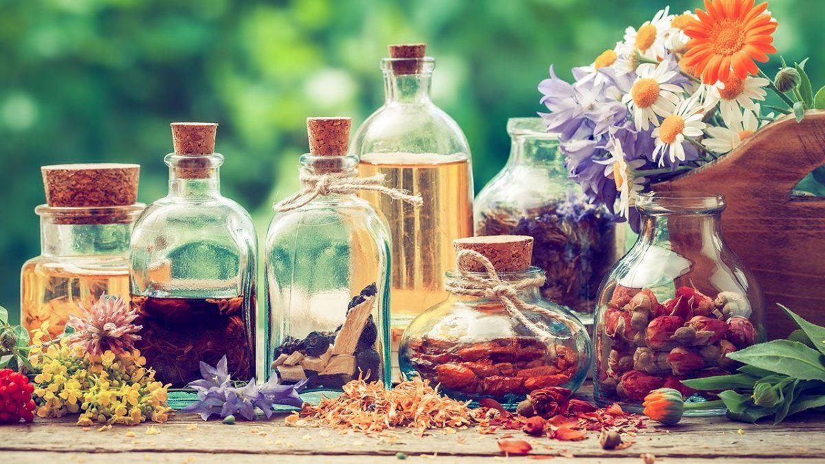 Plantas medicinales para el dolor de cabeza.