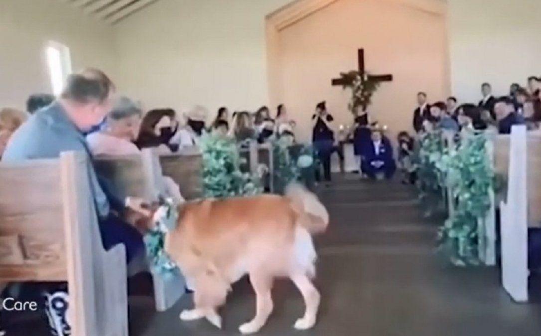 Video viral: un perro se llevó la atención en el casamiento de sus dueños.