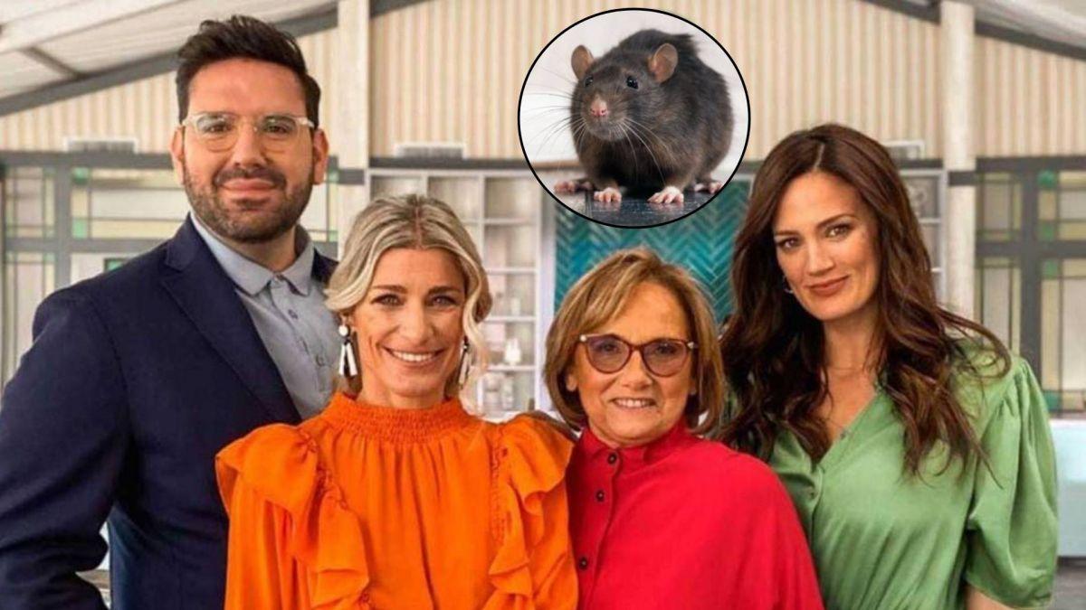 Se aclaró qué pasó con la rata que apareció en pantalla.