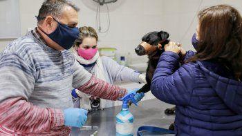 Castraciones y vacunación: cómo sigue la campaña gratuita en la ciudad de Santa Fe