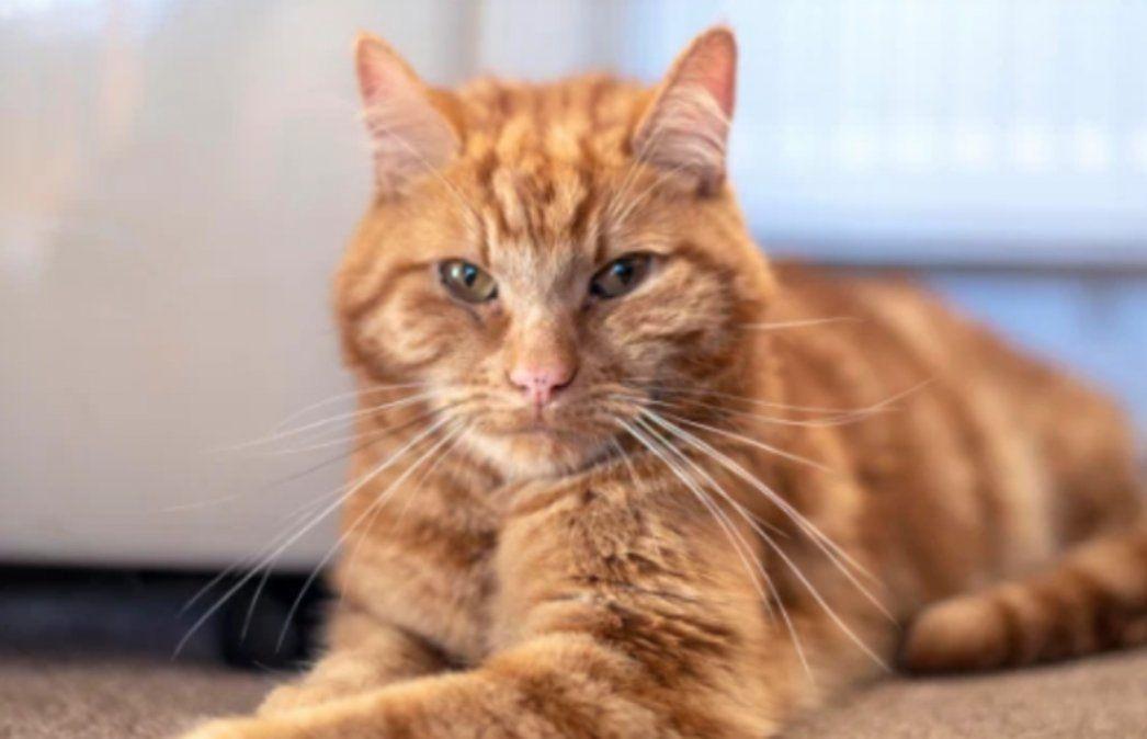 El gato que viajó 64 kilómetros para reencontrarse con su familia.