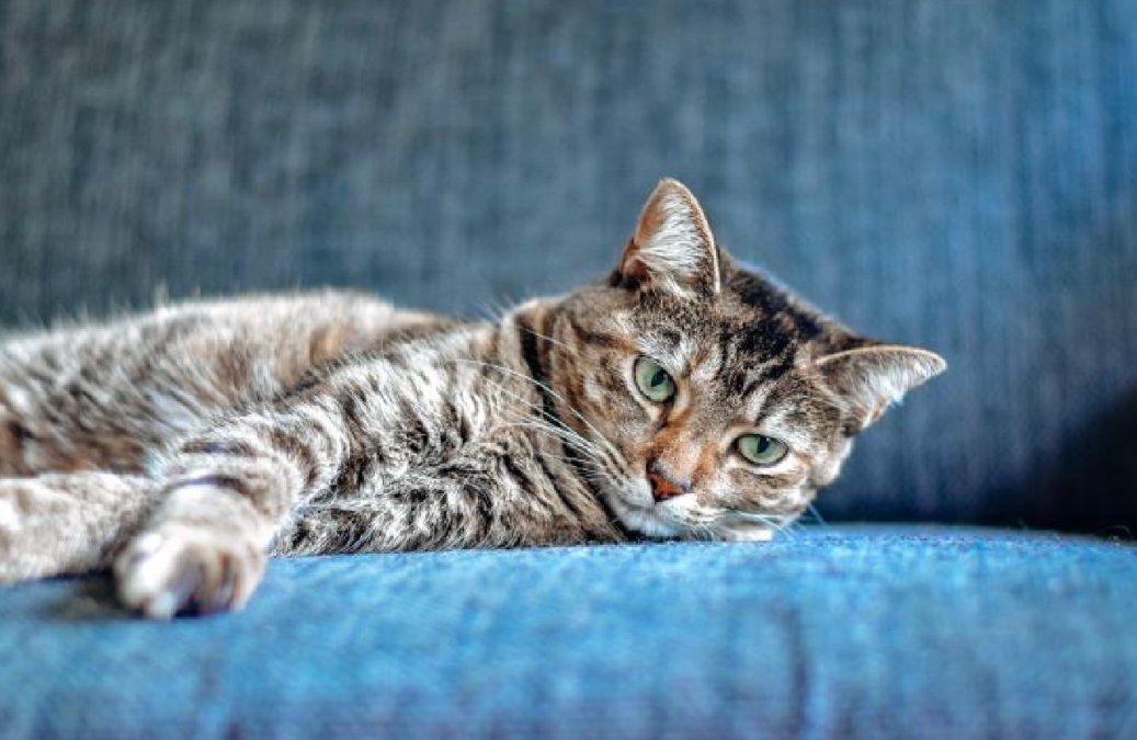 Perros y gatos sufren depresión después de convivir con sus dueños durante la pandemia