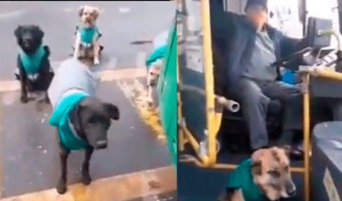 Rescatan perros callejeros para acompañar a los choferes de una empresa de transporte