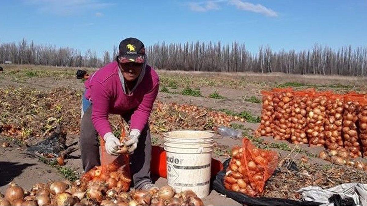 Del MTE de Grabois a los Sin Tierra de Brasil: El sueño de los pequeños productores de exportar su propia cebolla