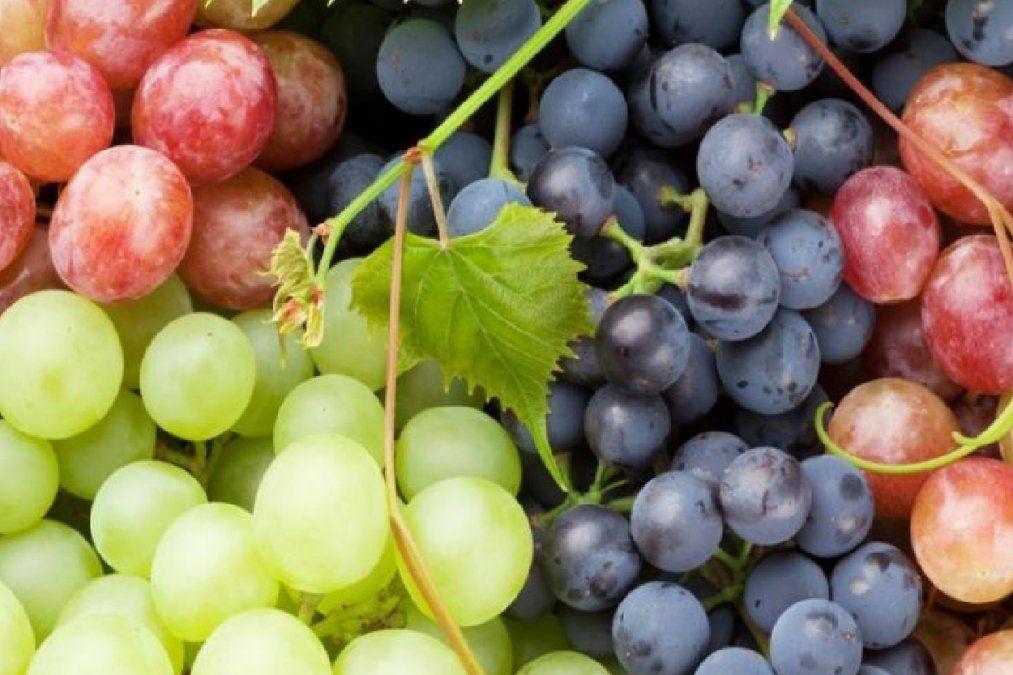 Cuáles son los beneficios de las uvas para nuestro organismo
