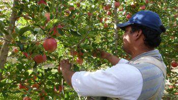 10 mil trabajadores golondrina ya arribaron a Río Negro para la temporada de cosecha