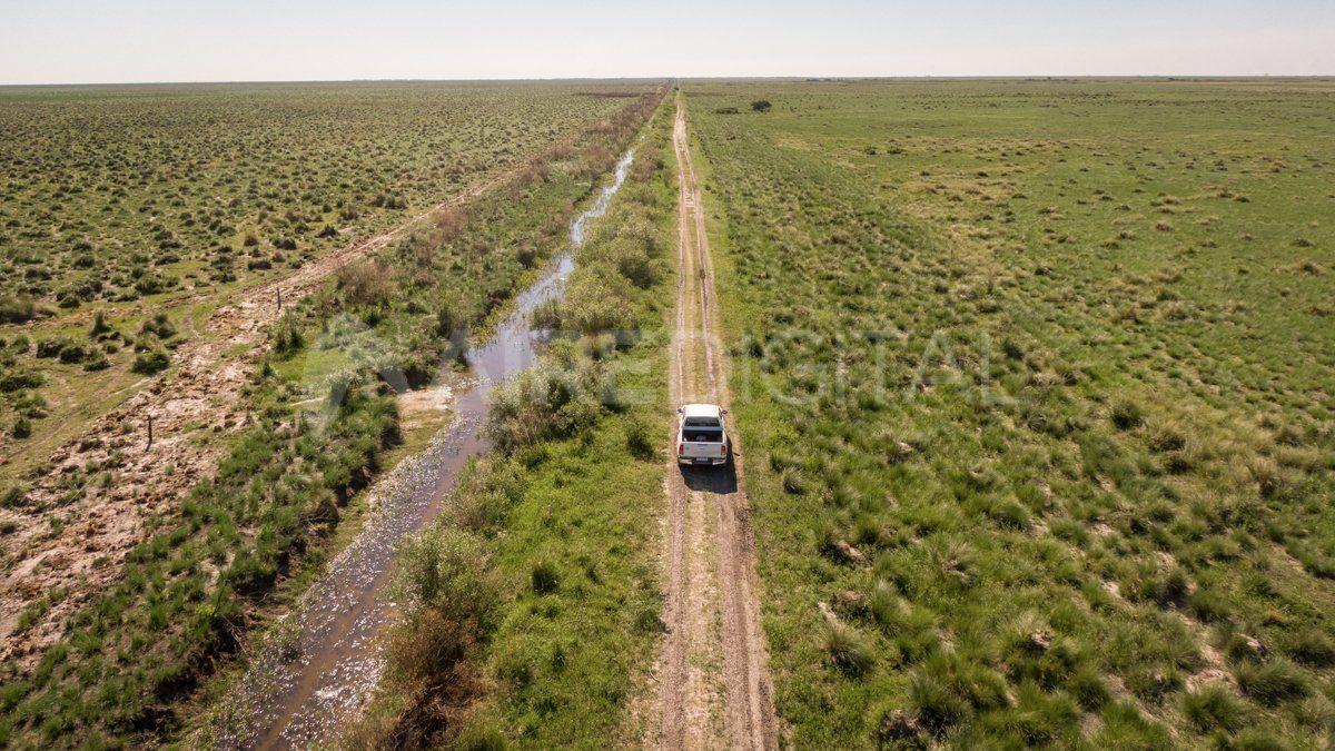 Los campos de los bajos están llenos de espartillos y tucurús