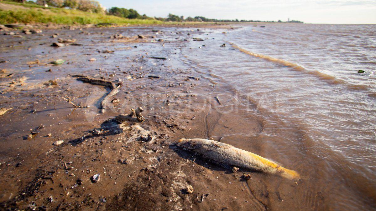 La bajante del río Paraná es la bse de la decisión judicial
