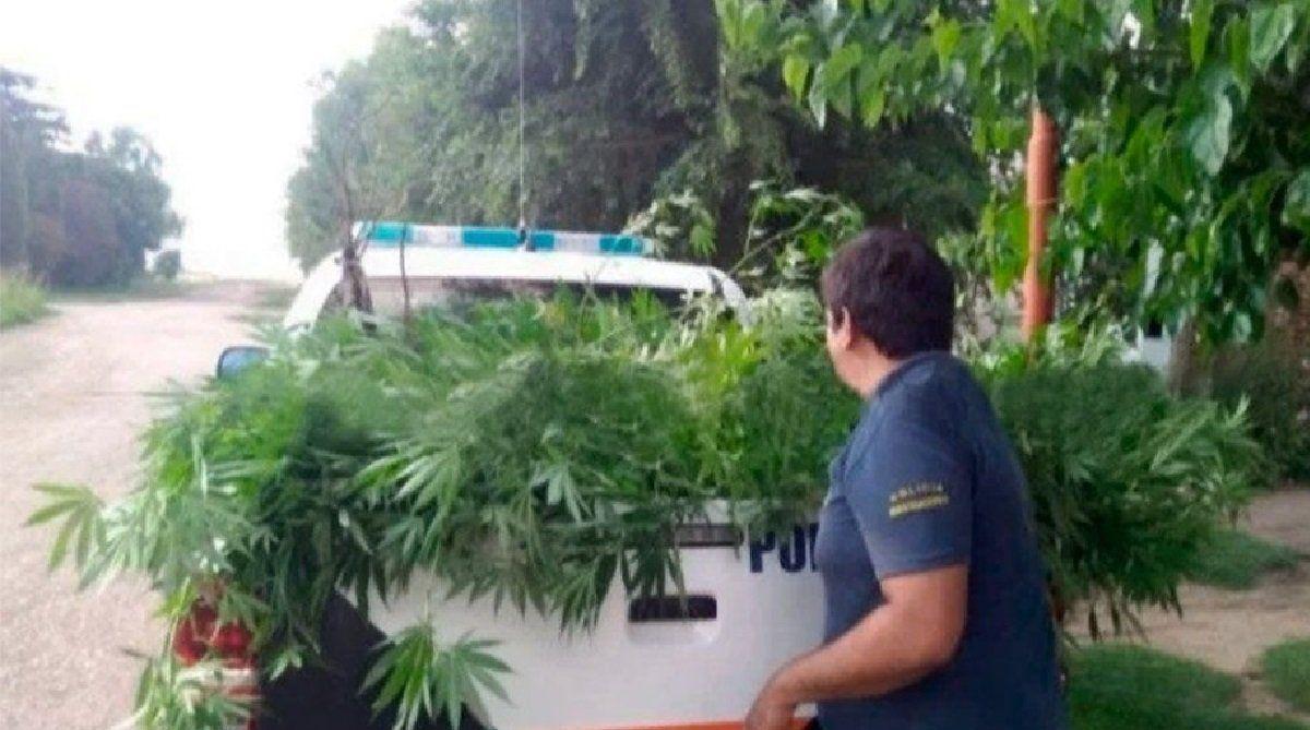 Plantación de marihuana con cerco electrificado: condenaron a prisión a una pareja