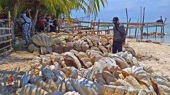 Unas 200 toneladas de moluscos gigantes, fueron incautadas el 16 de abril de 2021 en la región de Palawan, en Filipinas. Foto divulgada el 17 de abril por los guardacostas Handout Philippine coast Guard (PCG)/AFP