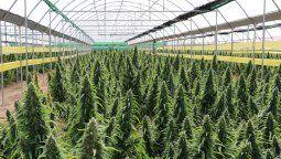El integrante del Ministerio de Defensa explicó que se avanzó con el Inta (Instituto Nacional de Tecnología Agropecuaria), con Conicet  para utilizar el predio de FANAZUL para producir cannabis medicinal y cáñamo industrial.