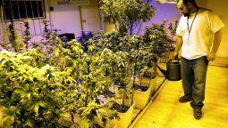Cuatro proyectos de ley vinculados al uso de marihuana tienen estado parlamentario en el Congreso de la Nación y esperan ser debatidos, tratados y aprobados en el período legislativo del año que viene.