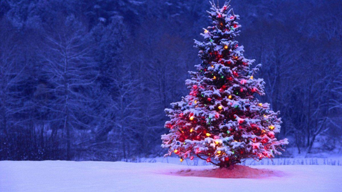 Se tendría que usar un árbol de Navidad de plástico durante 20 años para que su uso sea tan respetuoso con el medio ambiente como usar una sola vez un abeto natural.