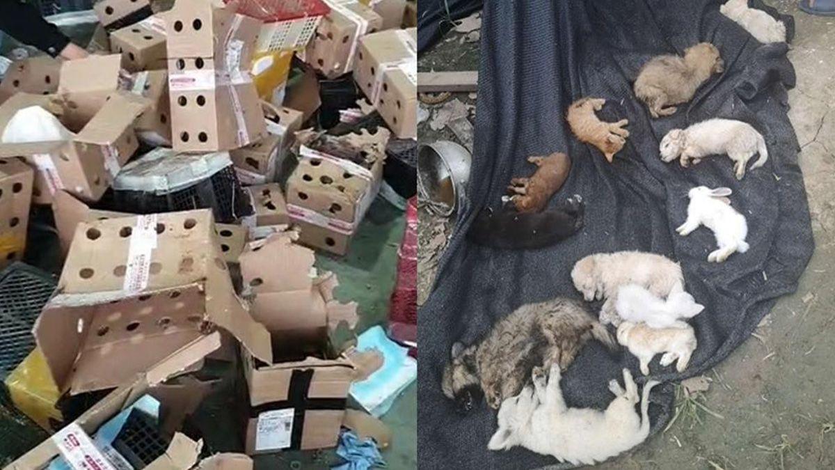 Macabro: hallaron en China 5.000 perros