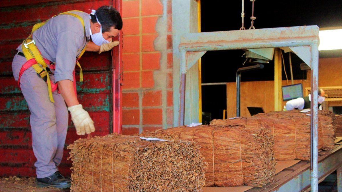 El acopio de tabaco superó los 30 millones de kilos en Misiones