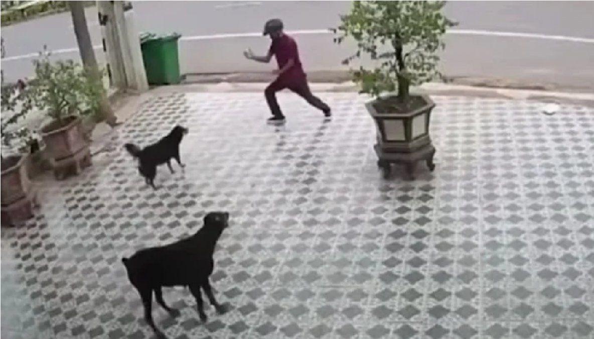Se salvó del ataque de unos perros por imitar al señor Miyagi de Karate Kid