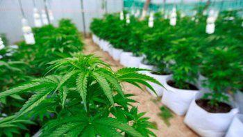 Comenzó el ciclo de formación en Endocannabinología, Cannabis y Cannabinoides