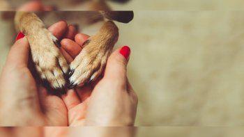 Chile podría elevar a 10 años de cárcel la pena por maltrato animal
